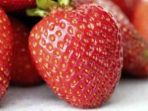 Ingrediente fresas